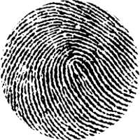 Fingerprints, Palmprints and Toeprints